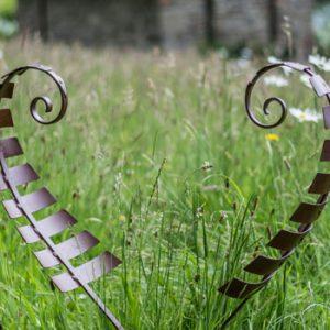 Lawn Ferns by Chris Kampf